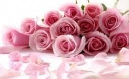 kwiaty - Kliknięcie w obrazek spowoduje wyświetlenie jego powiększenia